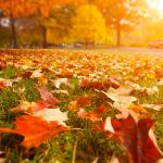 Tête de lit automne - Visuel