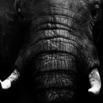 Tête de lit éléphant - Visuel