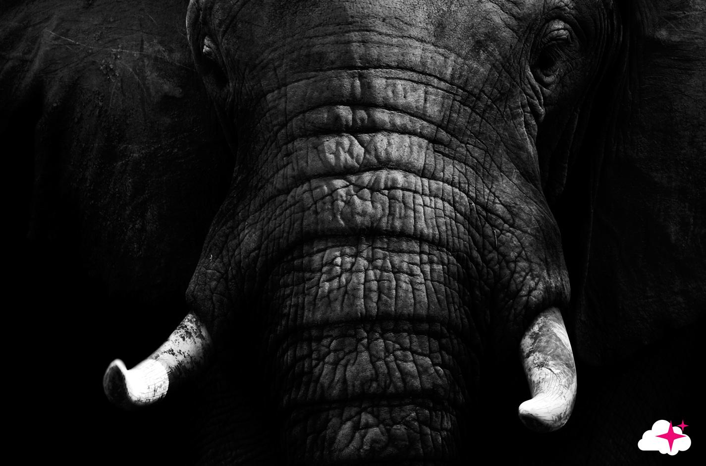 tte de lit lphant visuel - Cadre Elephant
