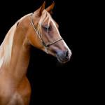 Tête de lit cheval alezan - Visuel