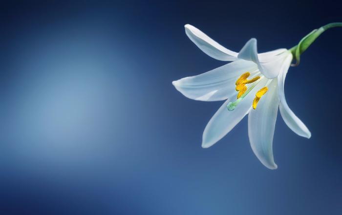 flower-729514_1280