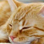 Tête de lit chat - Visuel