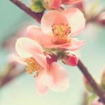 Tête de lit cerisier en fleur - Design